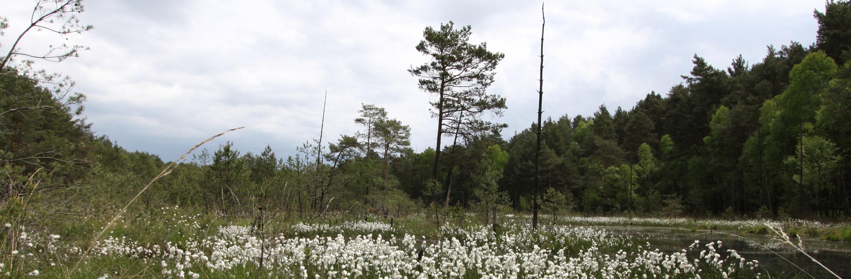 Vegetationskartierungen